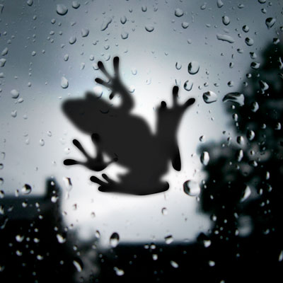 frog-on-glass-lighted