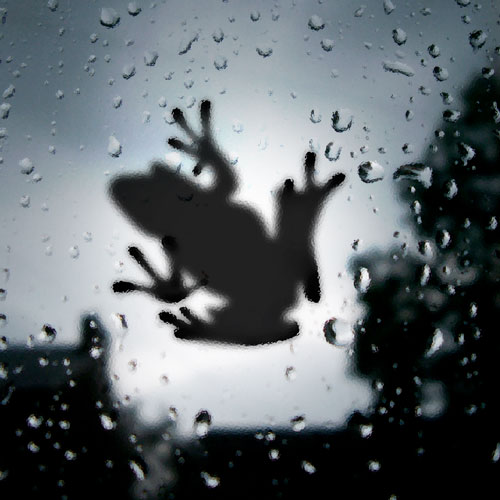 frog-on-glass