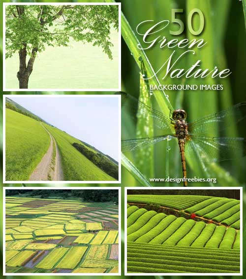 green-nature-wallpaper-background. Download link: 50 Refreshing Green Nature