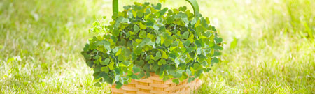 preview-basket-of-clover