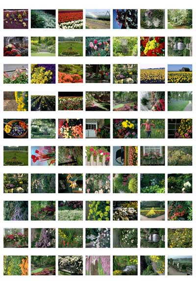 flower-fields-gardens-thumbs_page_1