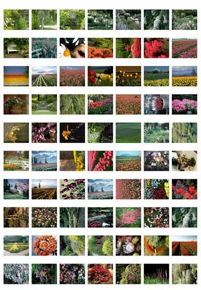 flower-fields-gardens-thumbs_page_2