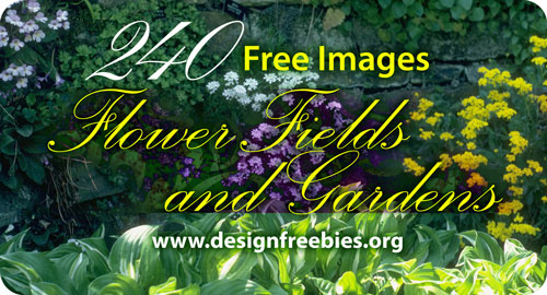 free-images-flower-fields-gardens
