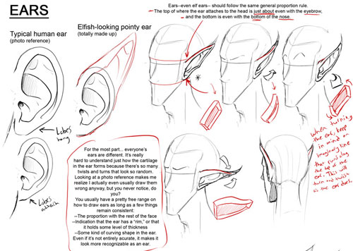 How to draw the human face 12